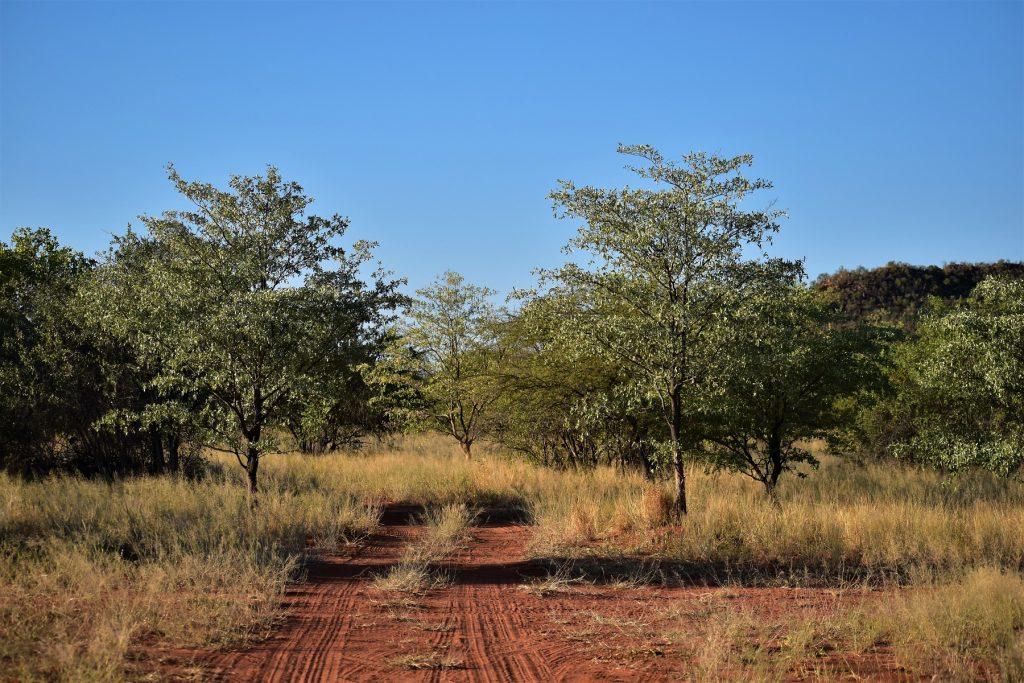 Africat Project