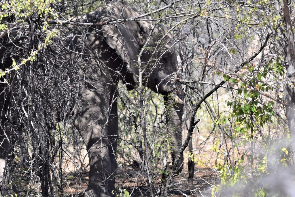 Elephants Dik dik road