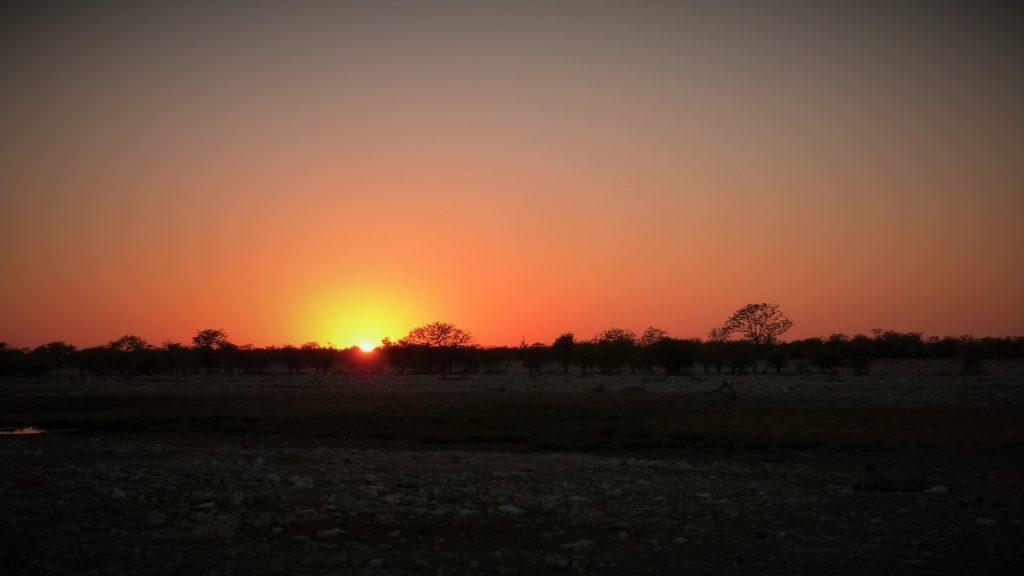 Morning Drive Etosha