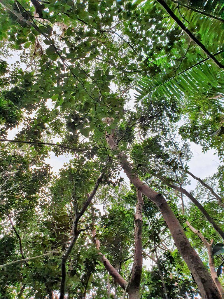 Gumbo trail Anhinga Trail Everglades