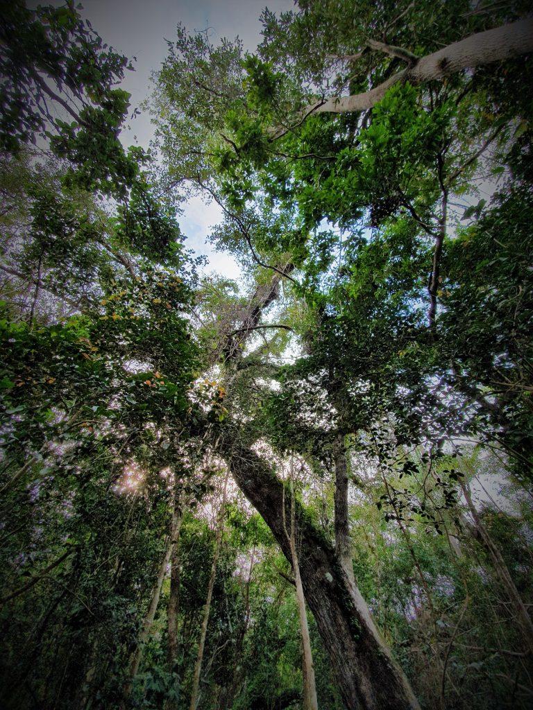 Gumbo Limbo trail Anhinga Trail Everglades